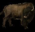 Bison - Seil 26