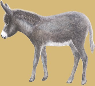 Pyrenäischer Esel - Seil 51